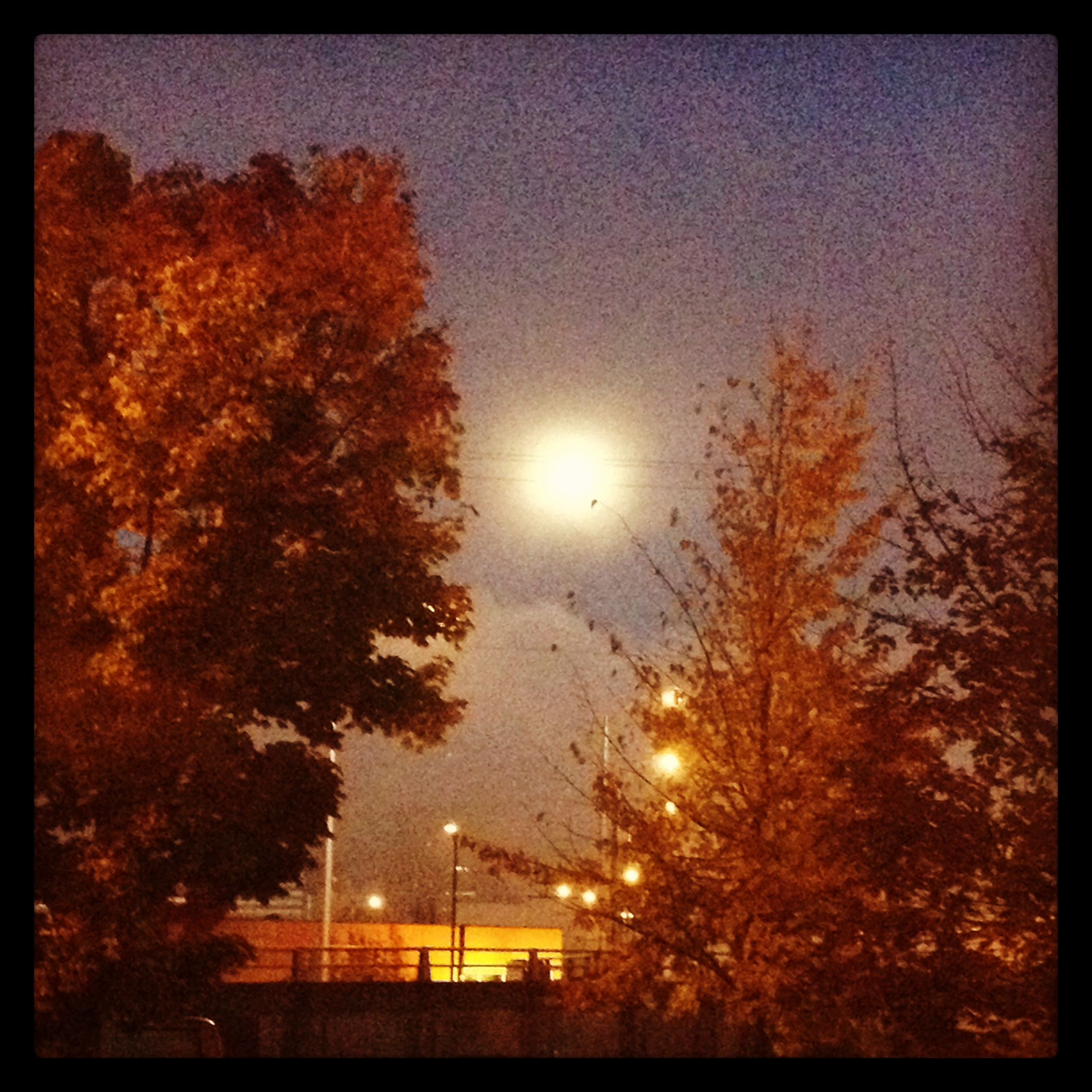 The full Moon about to sink into the fog...