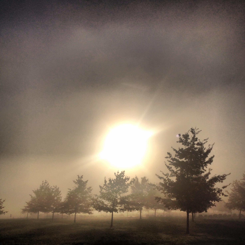 Early morning fields.