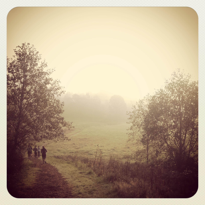 Trails through unexplored, foggy meadows.
