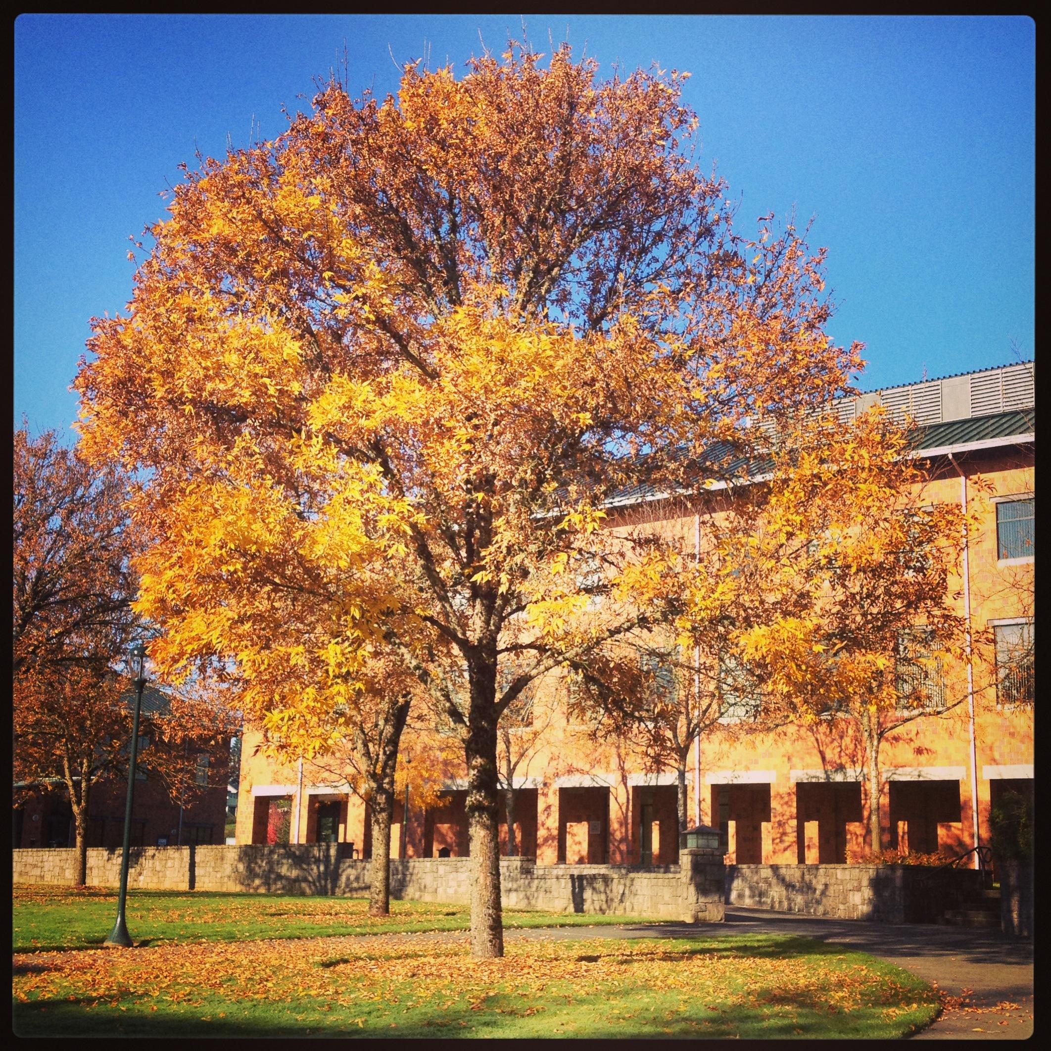 On campus.
