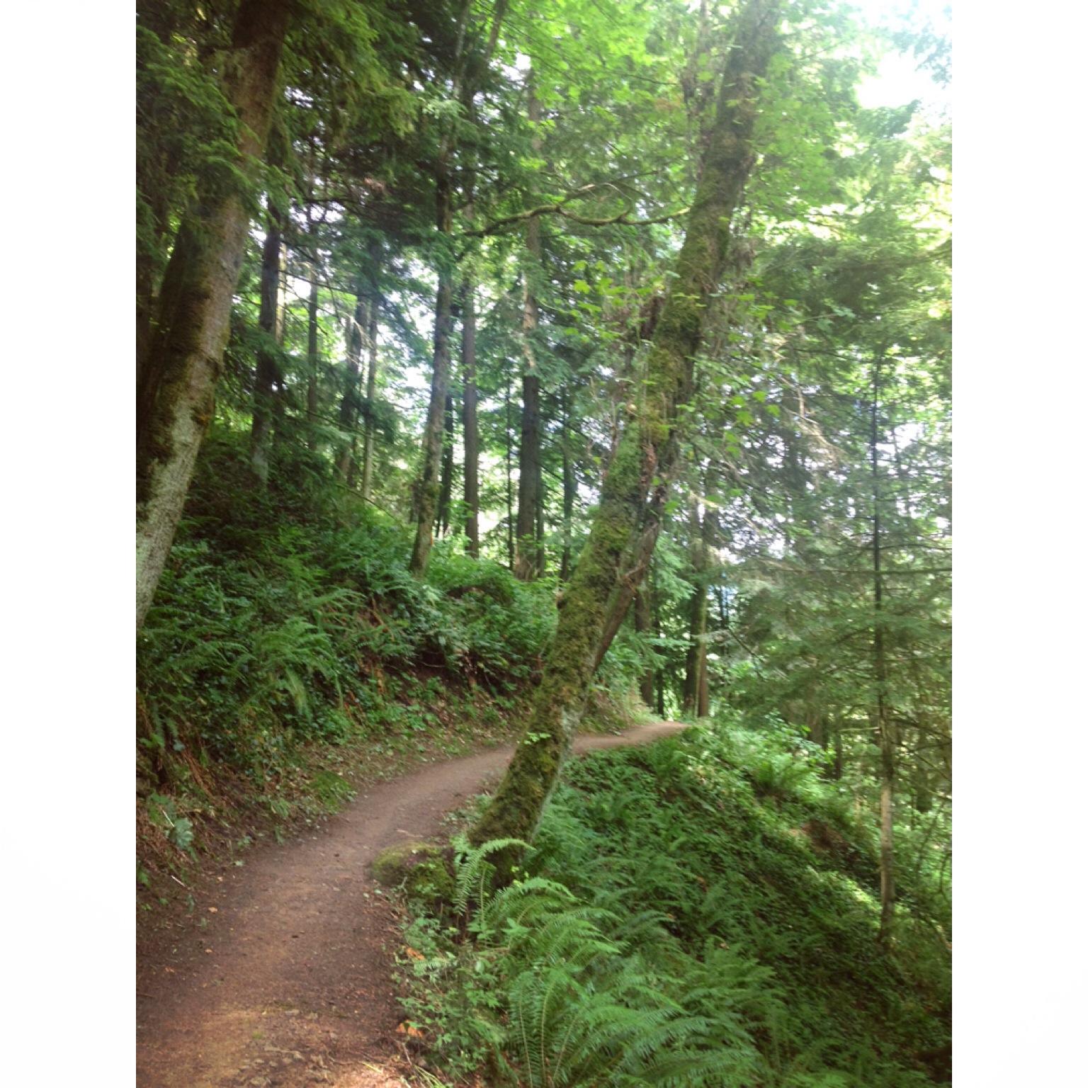 Lower Macleay 6/29/14 downhill