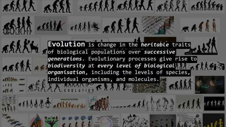 Evolutionary Design_006.jpg