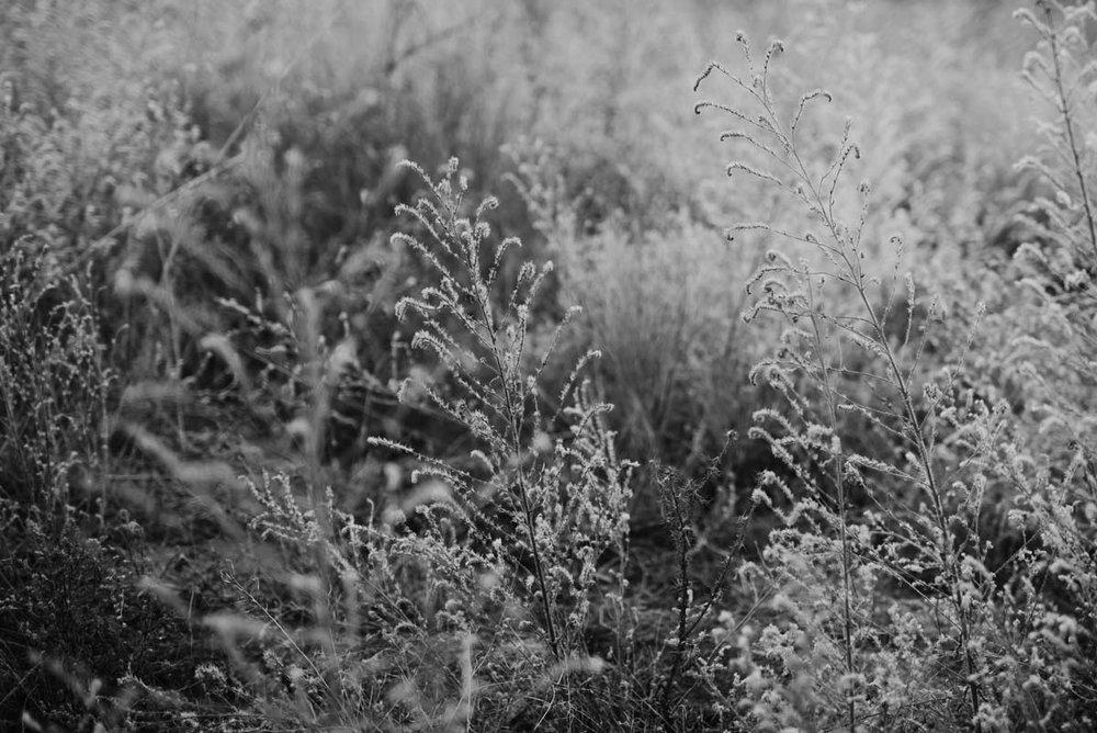 ....Perfect vegetation for a shooting day. ..Vegetación perfecta para un día de fotografías. ....
