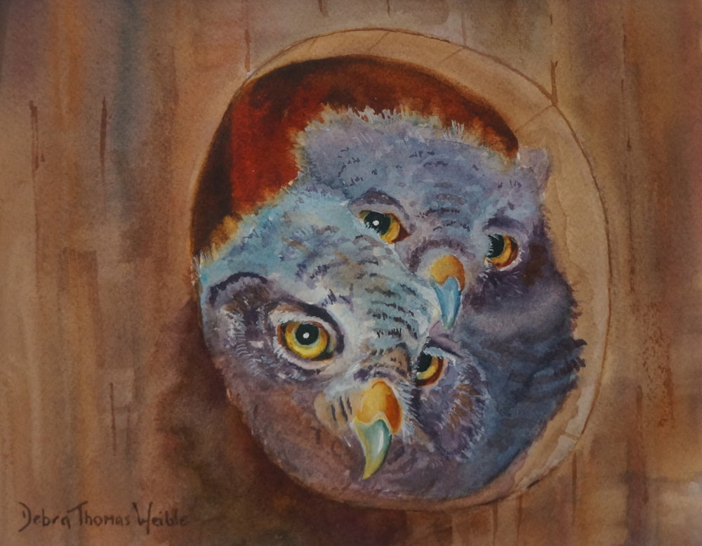 """Owlets"""