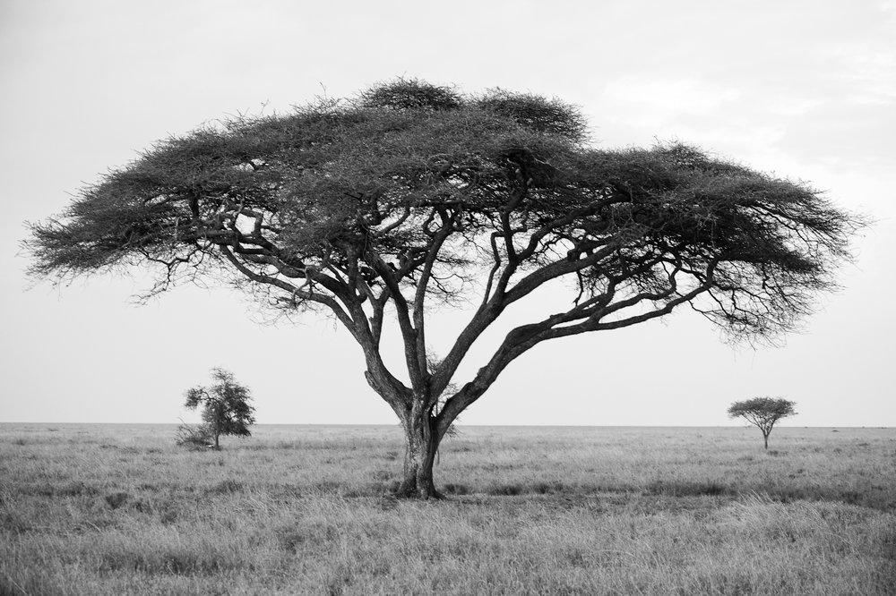 serengeti3.jpg