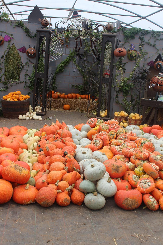 pumpkins r us warwickshire