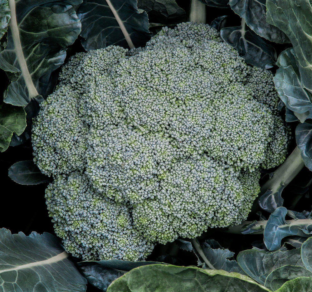 _MG_7345BroccoliSM.jpg