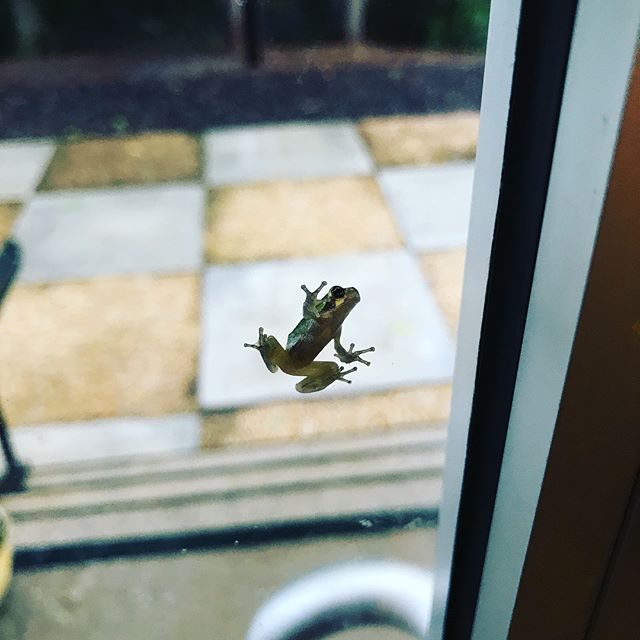Lately, our ATL Studio's park-adjacent back door is party central for so many little froggies. 🐸
