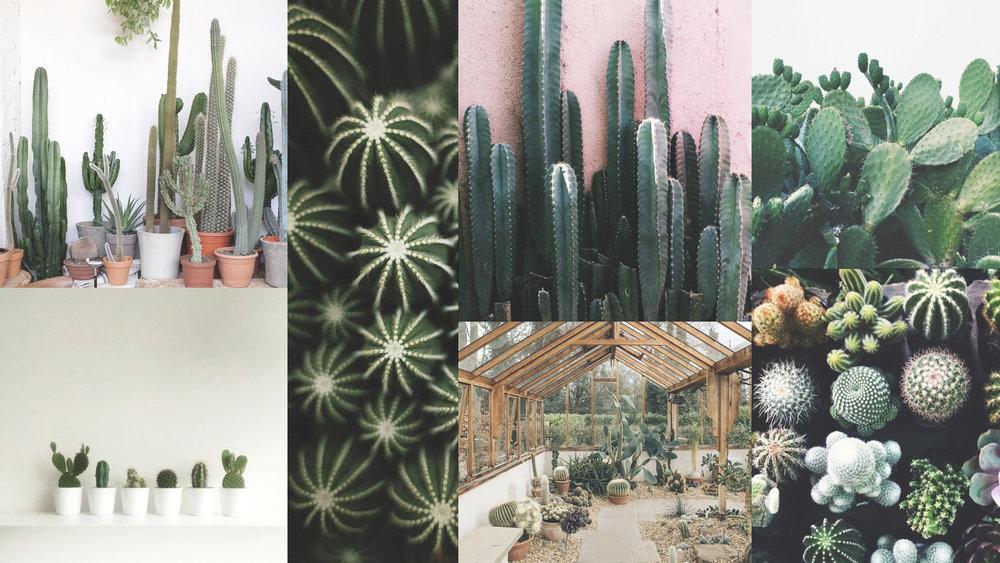 CactusMood #moremood #cactus #green #greenfinger #summer #pastelcolor