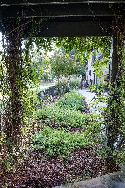 Wood pergola and garden