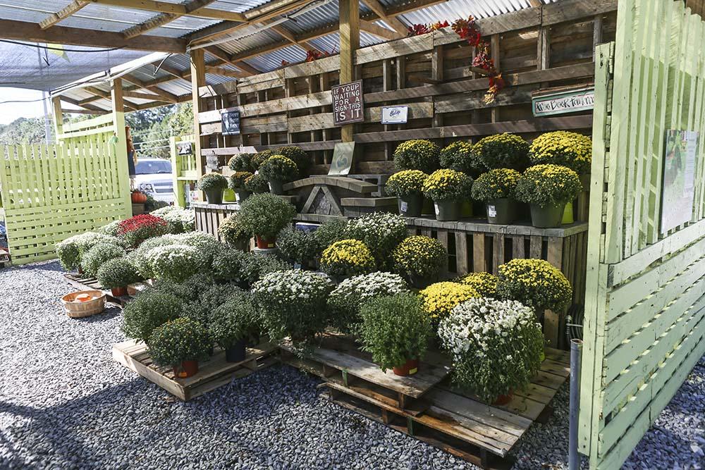 Secret Garden   Learn To Garden Like A Pro