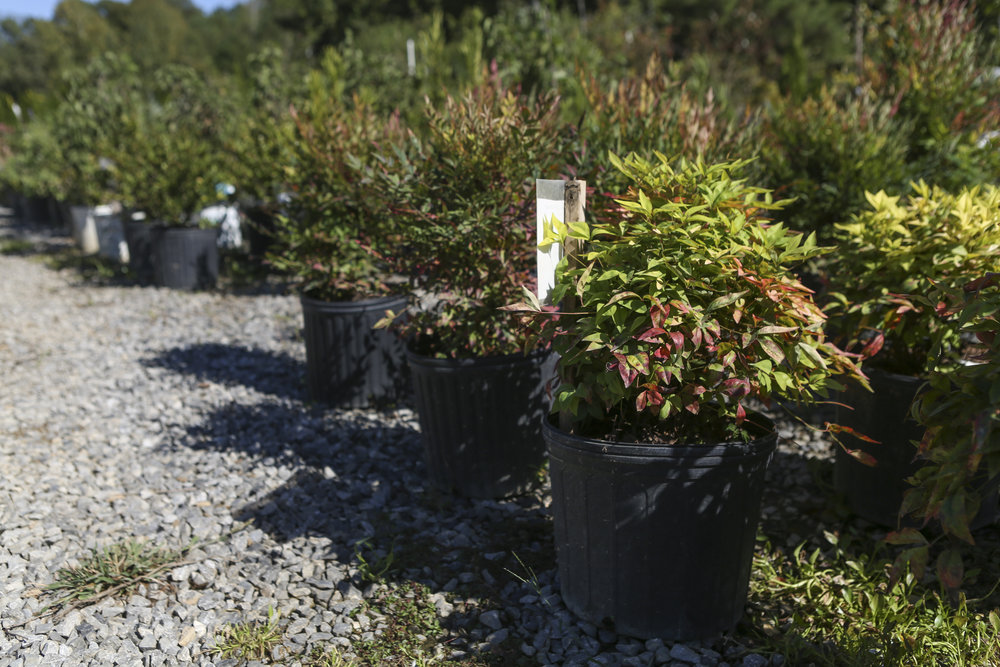 Find the perfect shrubs for your garden at the Secret Garden