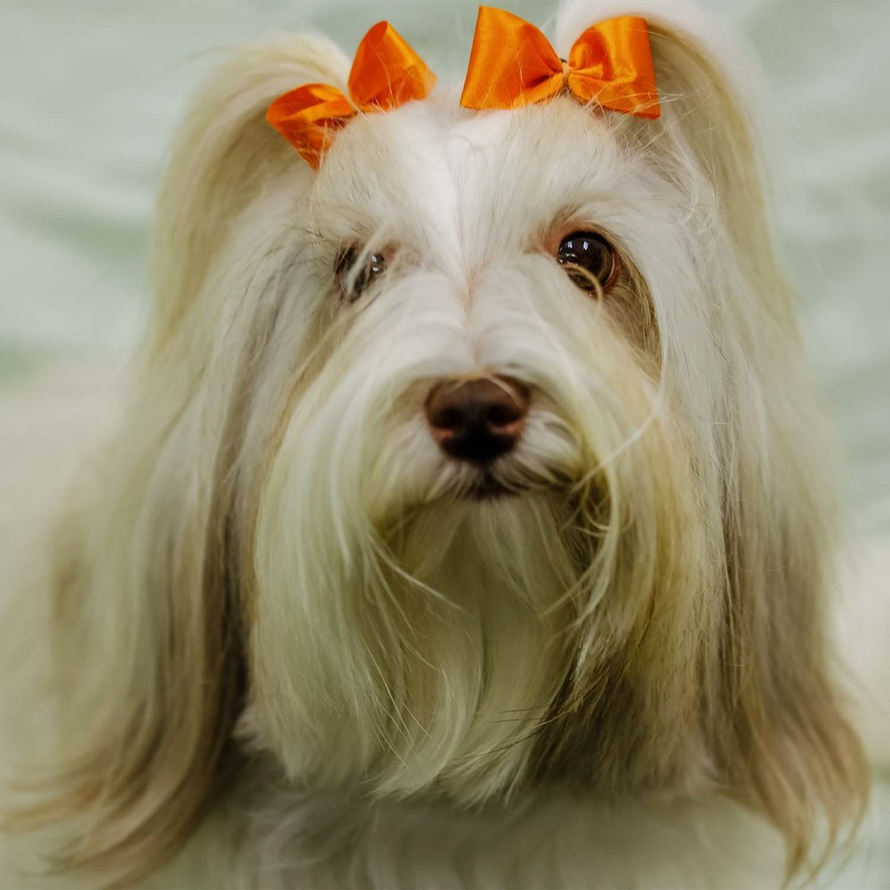 Round out your dog's look with our wide selection of hair bows.