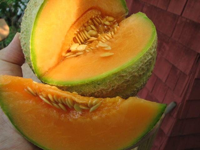 Melon #2