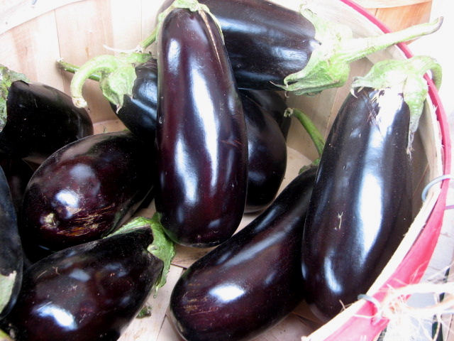 Black Beauty, a really fine open-pollinated eggplant for slicing. I also like Florida Highbush types which yield big glossy black fruits.