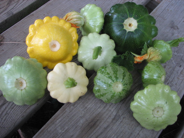 Long Island Complete Pattypan Mix
