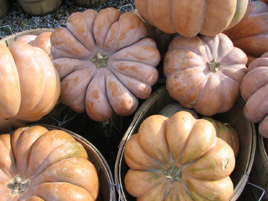 French Cheese Pumpkins