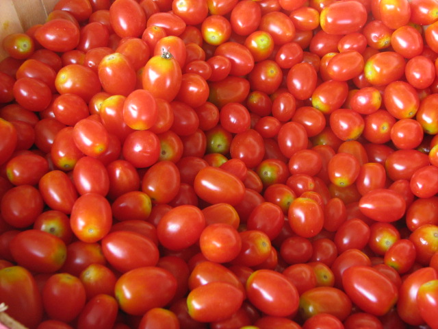 "Small 1"" oval red, yellow and pink for sauce and salads, consistent shape and size so that they match well. Today, these would be called grape tomatoes but these don't have the super sweet flavor of the modern grape tomatoes.  Sprawling vines."