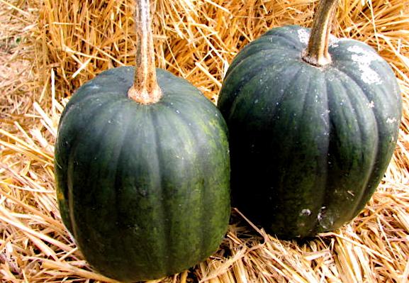 Dark Green Pumpkin