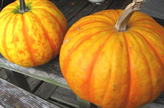 Orange Stripe Pumpkin