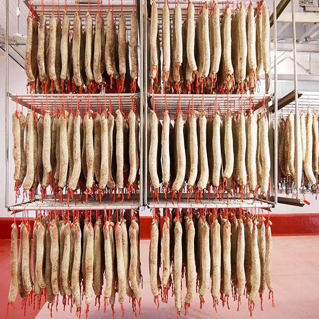 Touring the jamón and chorizo factory. Lunch was all-you-can-eat 💯% bellota jamón 😱. . . . . . #jamoniberico #jamonibericodebellota #chorizo #lomo #gastrotourism #sausagefactory #cntraveler #cnntravel #f52grams #guijuelo #salamanca #travelandleisure