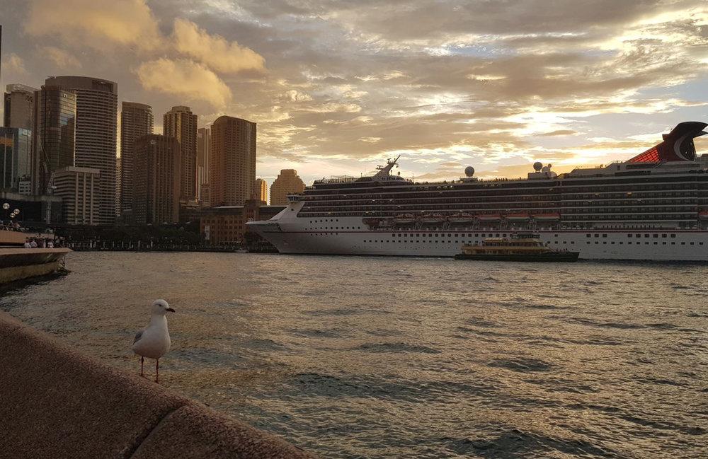 seagull sydney harbour.jpeg