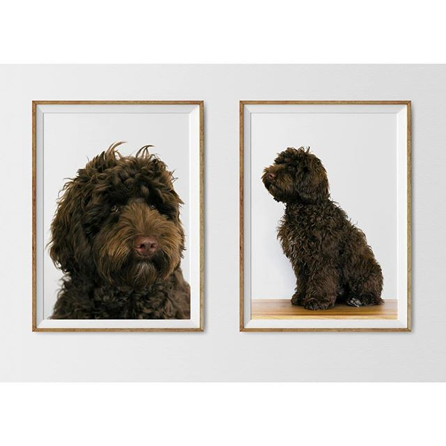 All we wanted was A dream; to have and to hold Precious little things . . . . #fatalframes #featurepalette #poetry #haiku #labradoodle
