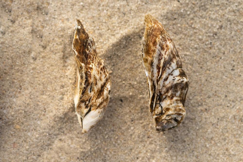 oyster-2.jpg