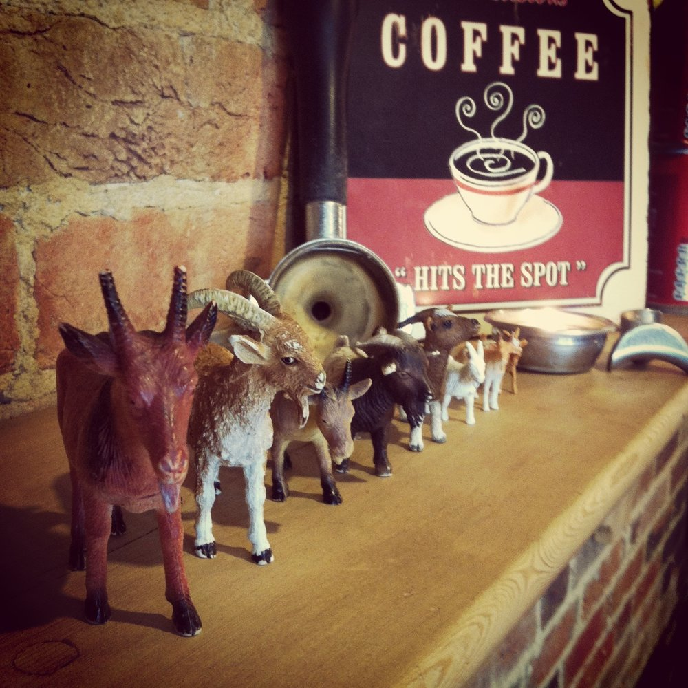 The Dancing Goat - coffee house - Ashley Cross Poole