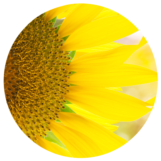 foodgevity circle photo sunflower positivity gratitude.png