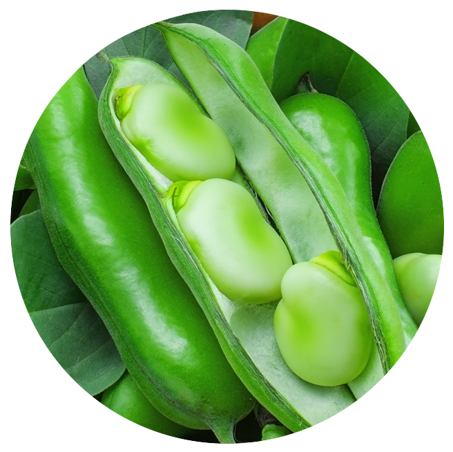 foodgevity circle photo soy beans.png