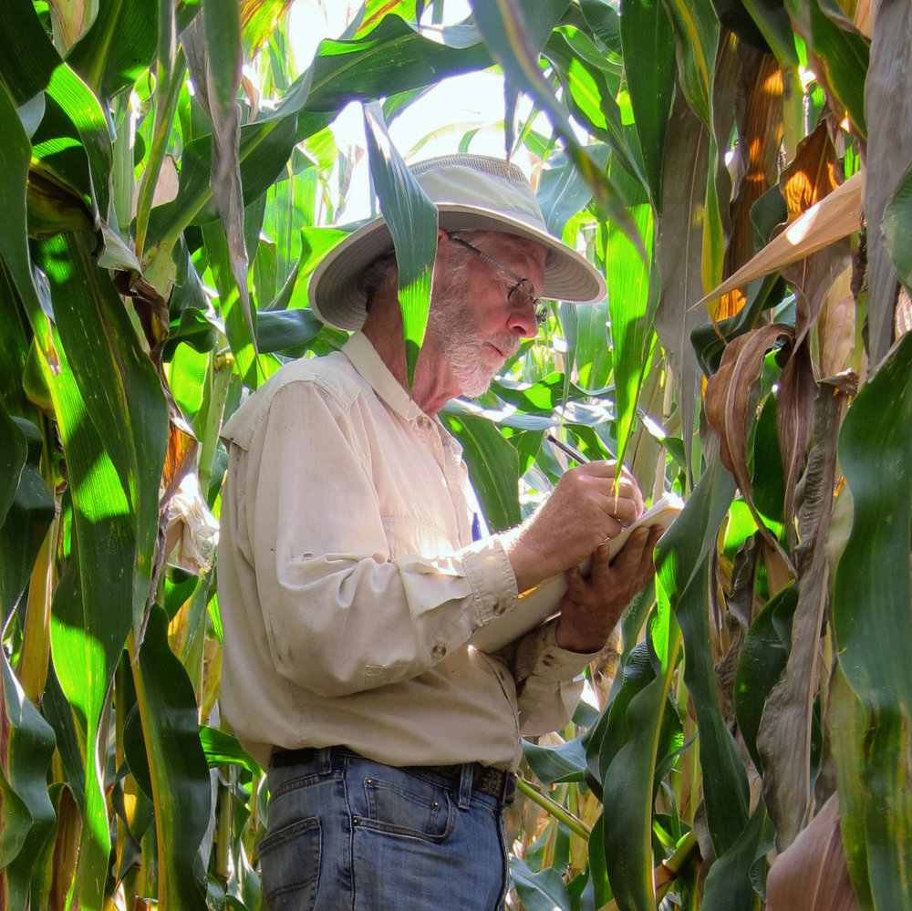 Dr. Francis Glenn making observations in a yield trial.