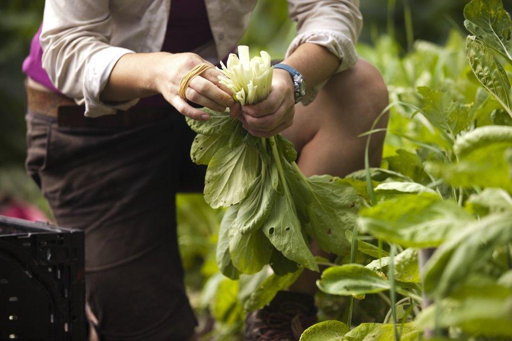 Lauren harvest hands web16.jpg