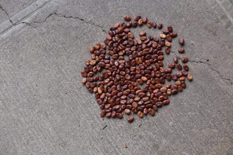 Seeds Ground jpg (800x533).jpg
