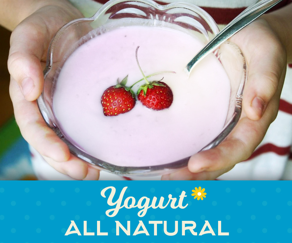 AllNaturalYogurt