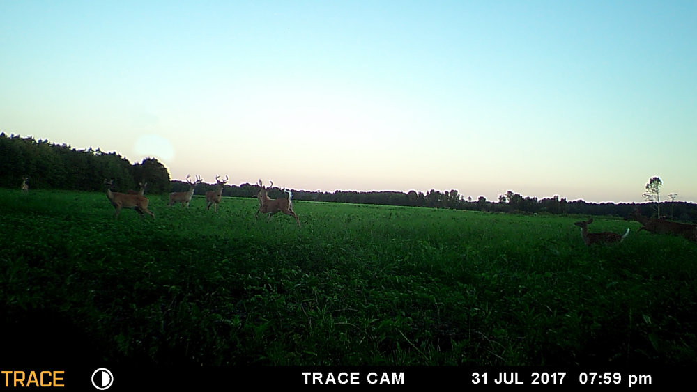 trailcam 3.jpg