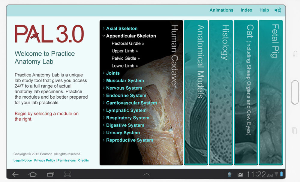 Practice Anatomy Lab | zaudhaus