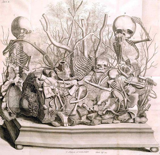 Frederick Ruysch, Fetal skeleton tableaux