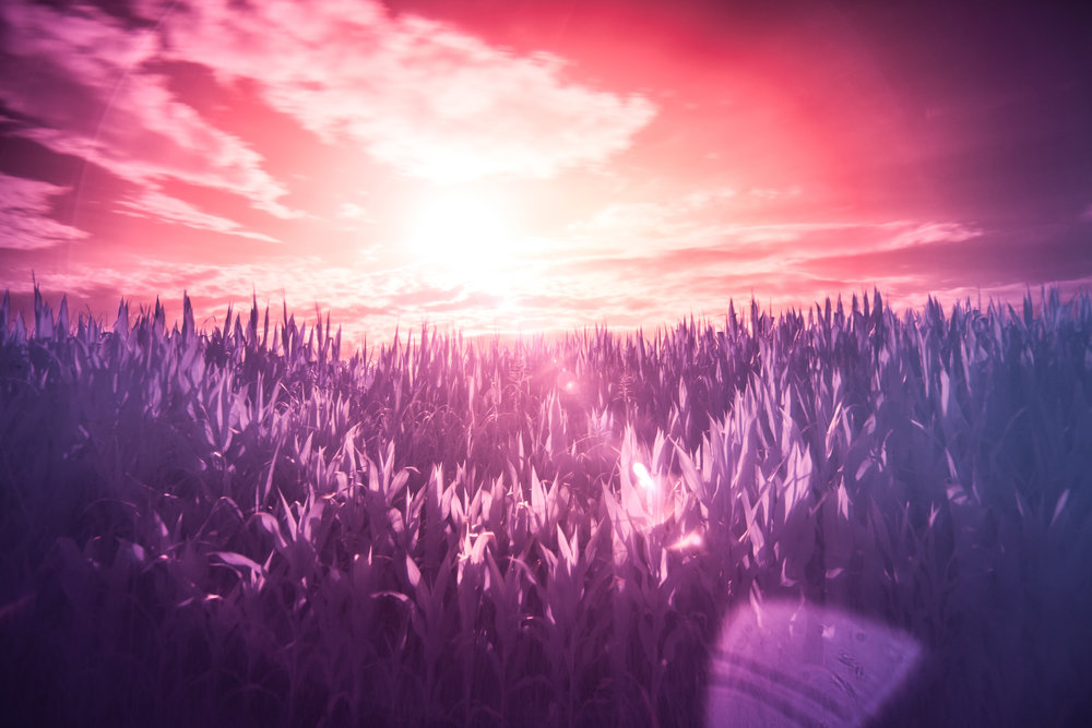 red-sun-purple-dream.jpg