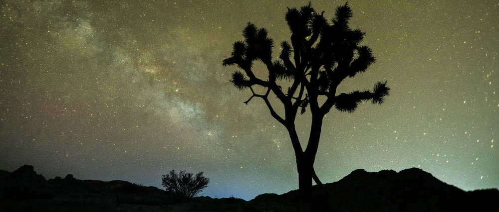 Photo courtesy of Joshua Tree National Park | Visible stars and the milky way of our galaxy