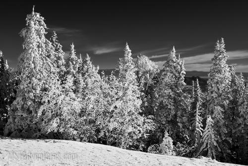Sandia Snowshoe Race-2.jpg