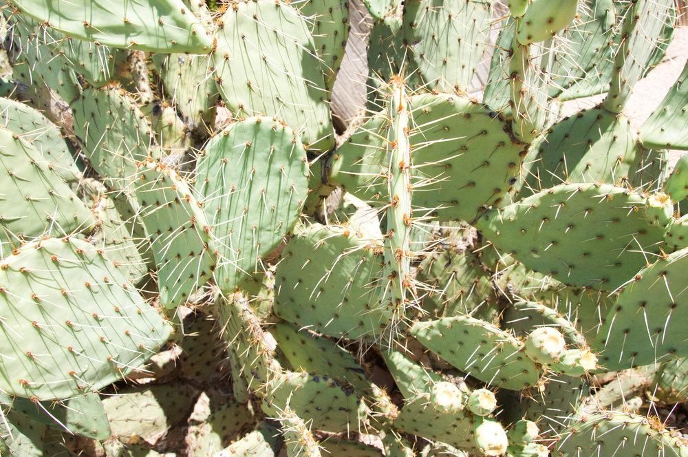 STome_Arizona.jpg