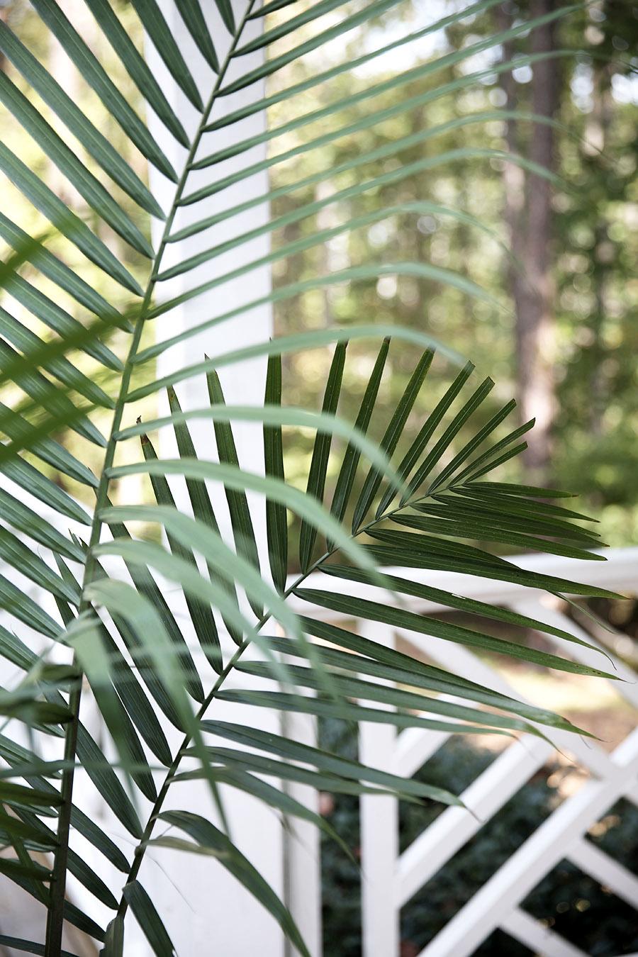 Repoting Palm 5.jpg