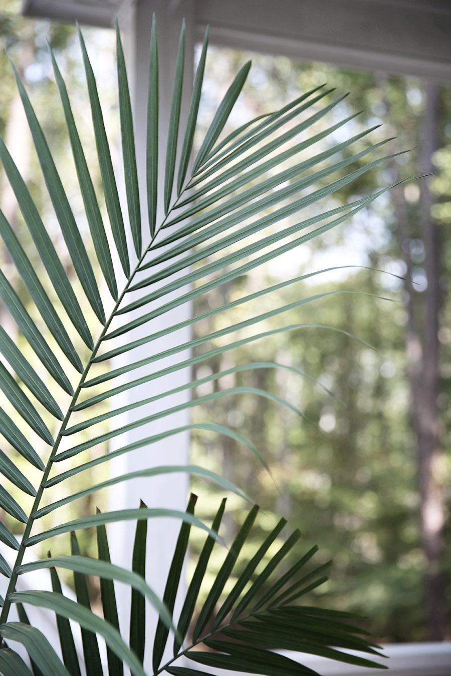 Repoting Palm 6.jpg