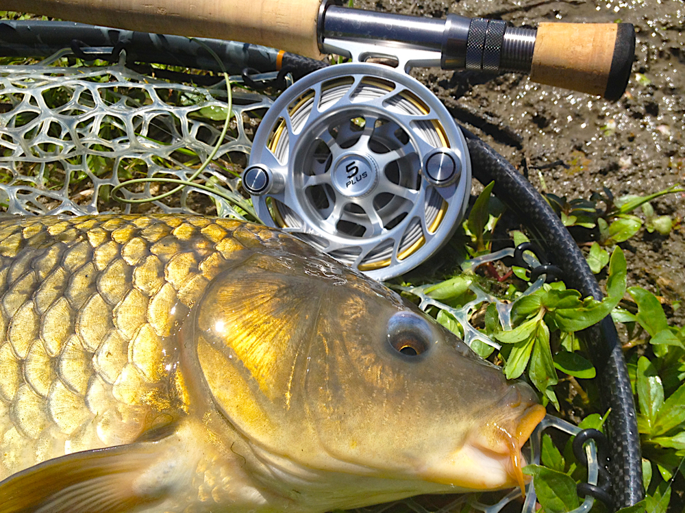 carp+22+Common+with+Rod+&+Reel-InFocus-Quick+Preset_1000x749.jpg