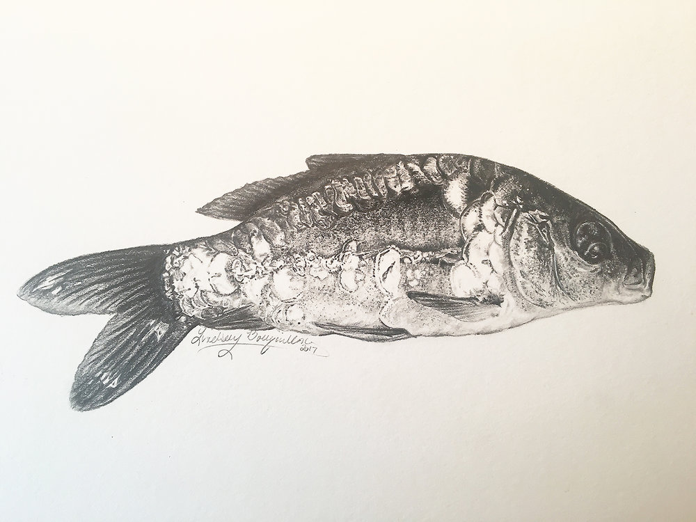 - Both Award recipients will receive a Trophy and a personally hand drawn picture of their choice by Official American Carp Society Artist Lindsay Bouquillon.