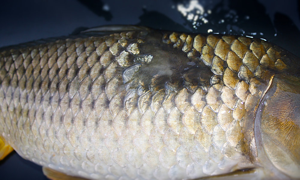 IMG_1168 Fish On Mat7.jpg