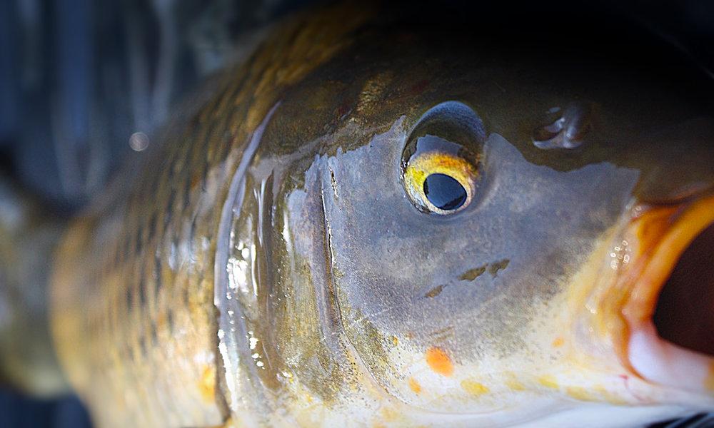 IMG_1229  Fish On Mat3.jpg