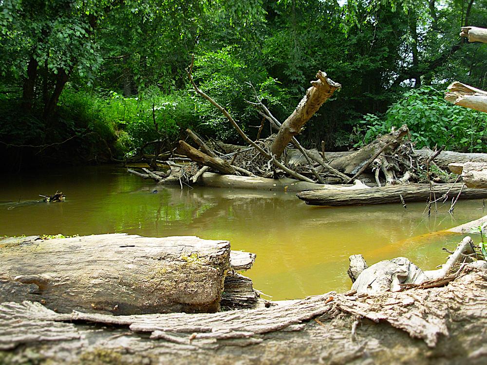 DSCN0816-Beaver-Dam2sm.jpg