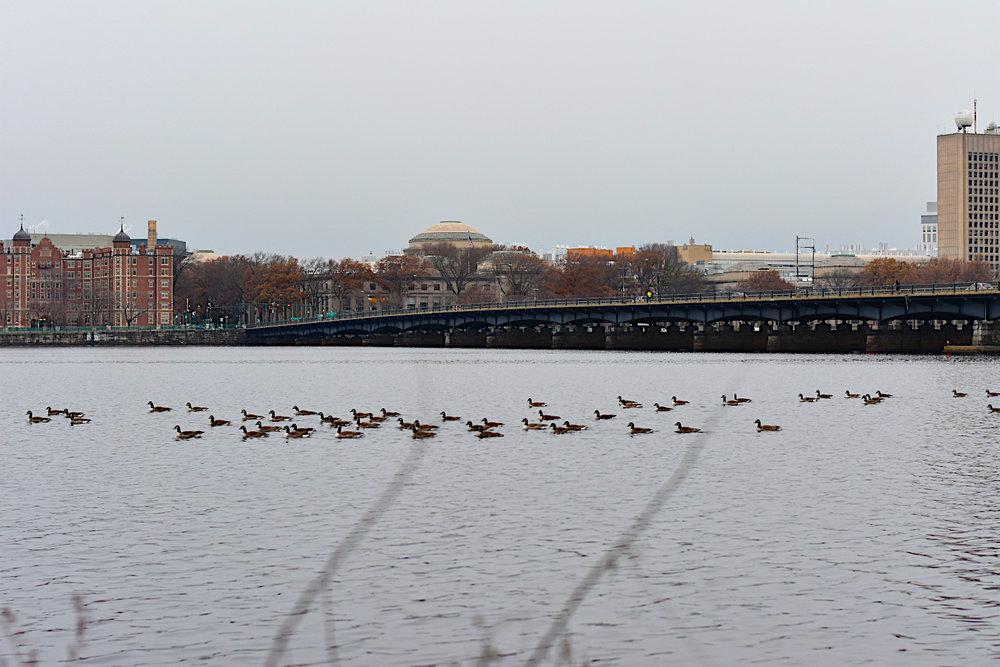Charles River swim.jpg